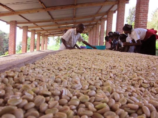 Microfarm Project: Ethiopia Yukro