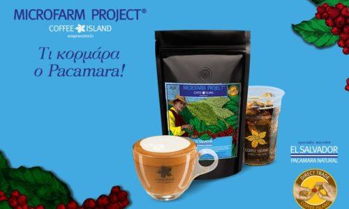 MicroFarm Project®: El Salvador – Pacamara