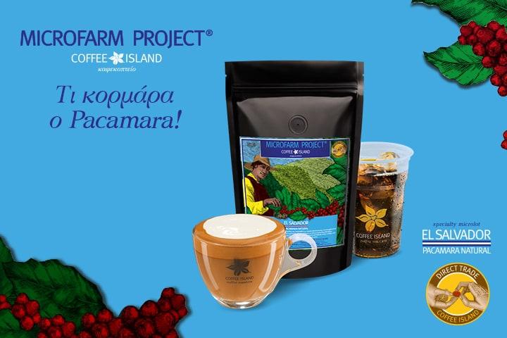 MicroFarm Project: El Salvador – Pacamara