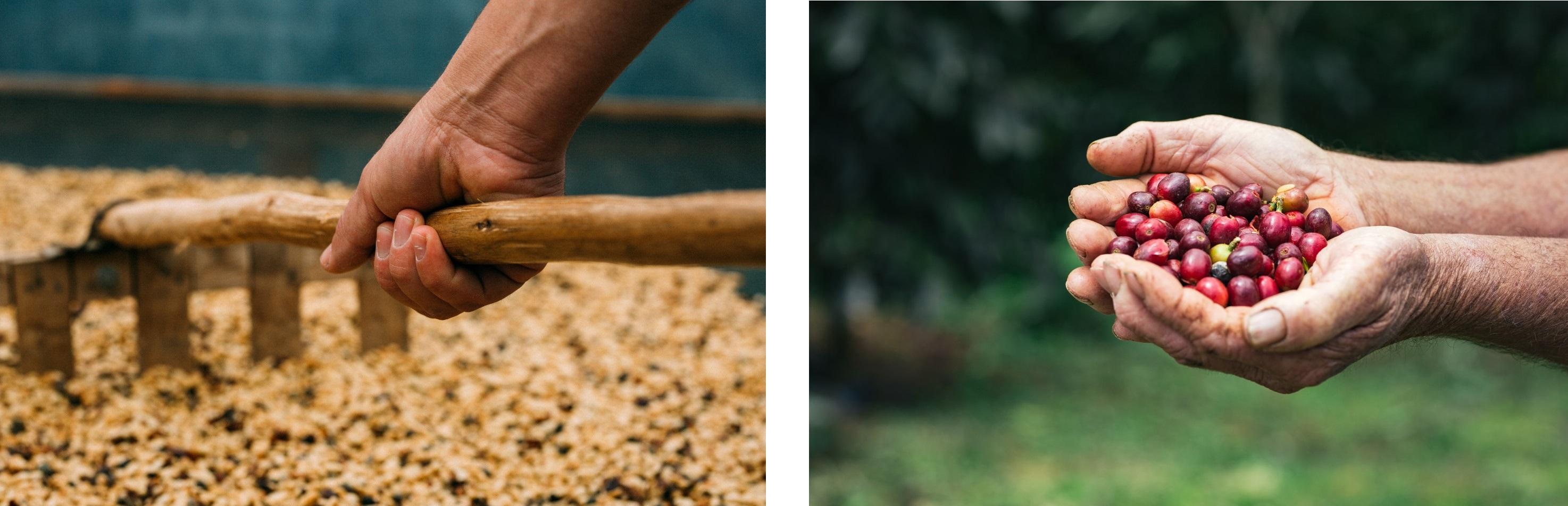Luiz's coffee farm