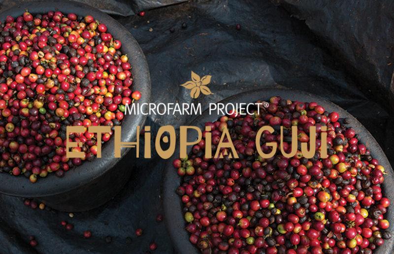 MICROFARM PROJECT® ETHIOPIA GUJI