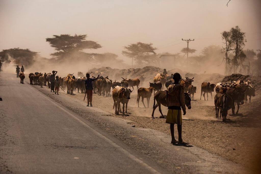 ethiopia_animals