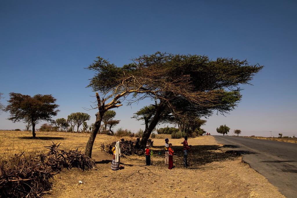tree_ethiopia