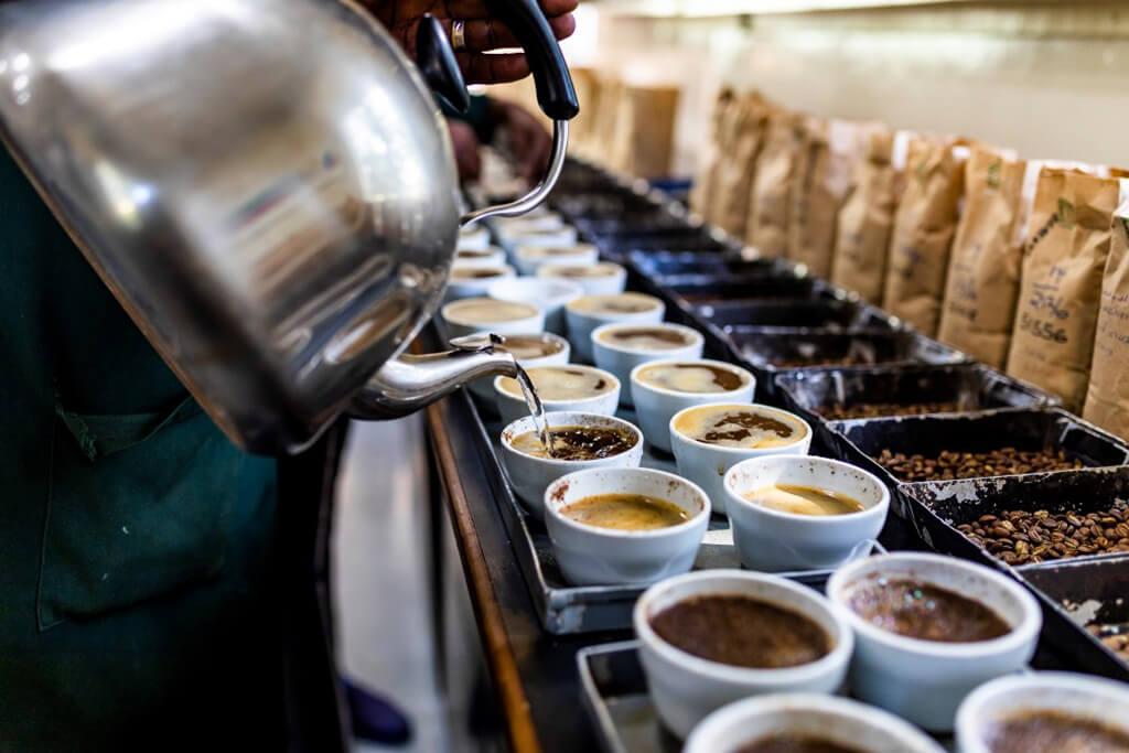 cupping_ethiopia