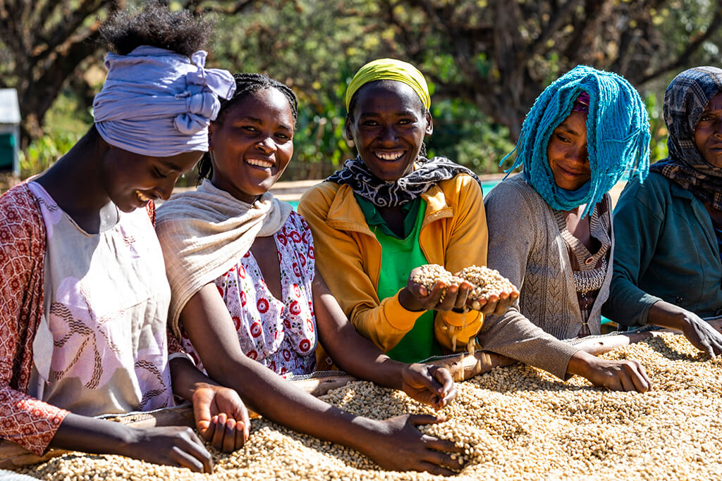Ethiopia Kutigenge: In fact, emotion has a Microfarm aroma