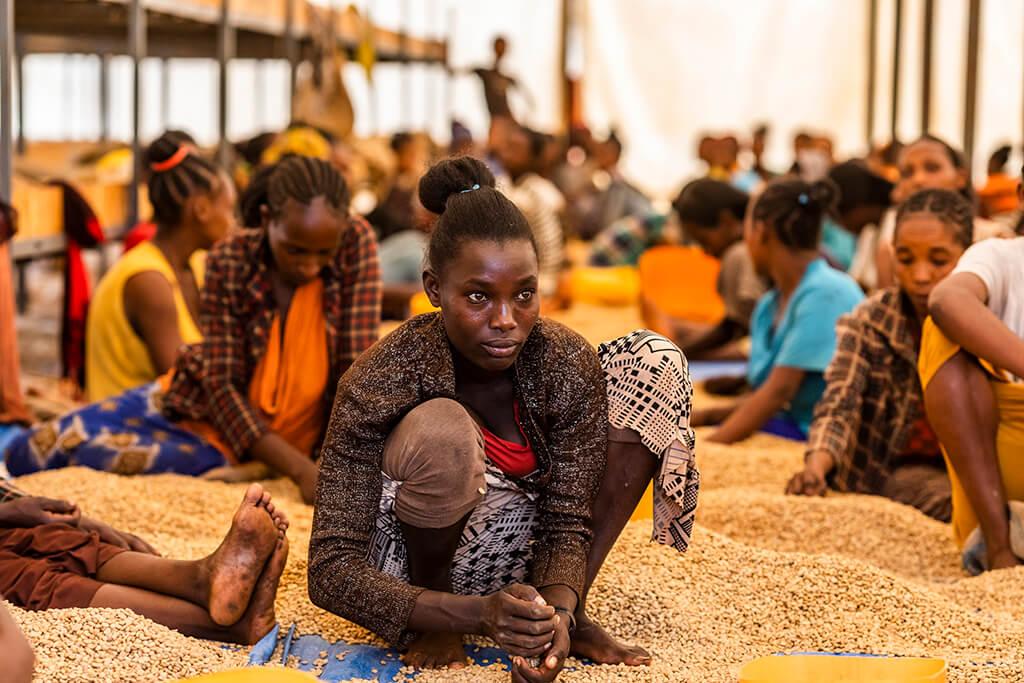 Coffee Island International Women's Day, Ethiopian women closely selecting coffee beans.
