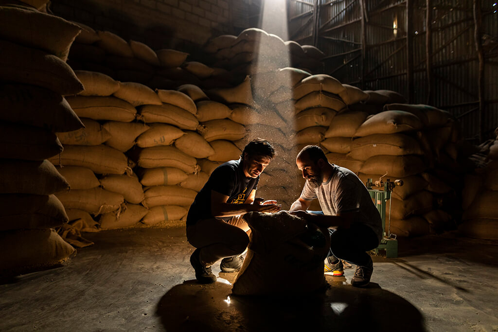 Two men observing coffee beans