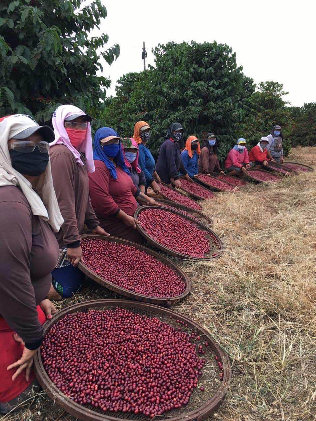 Coffee farm Capricornio