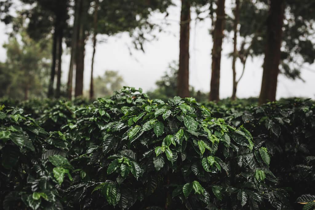 Landscape at Ethiopia.