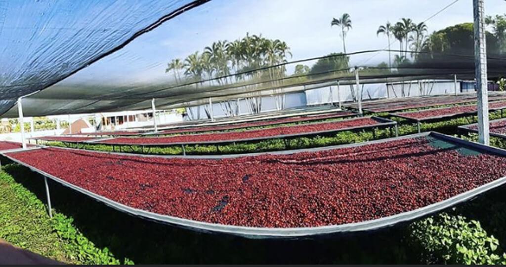 San Jose farm.