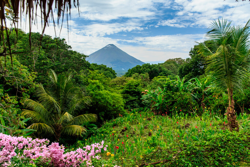 The Nicaragua Forest