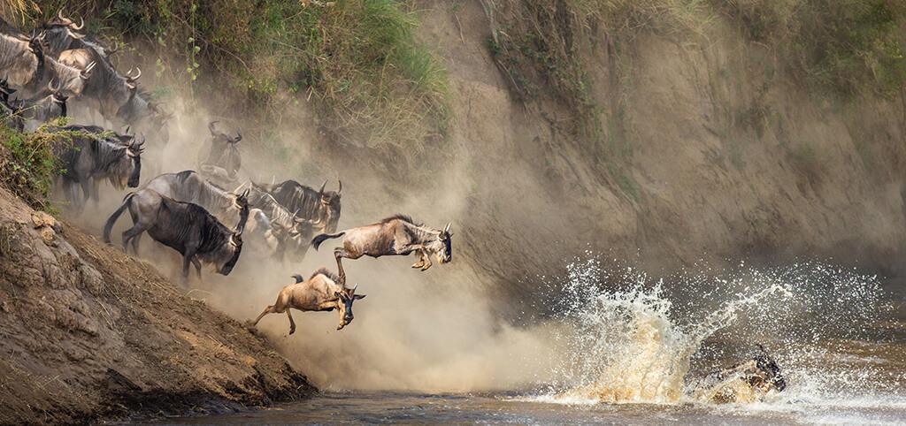 ANIMALS CROSSING MARA RIVER