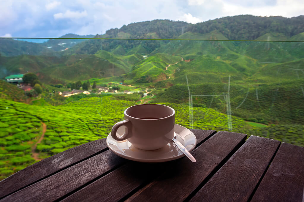 COFFEE WITH A FOREST VIEW