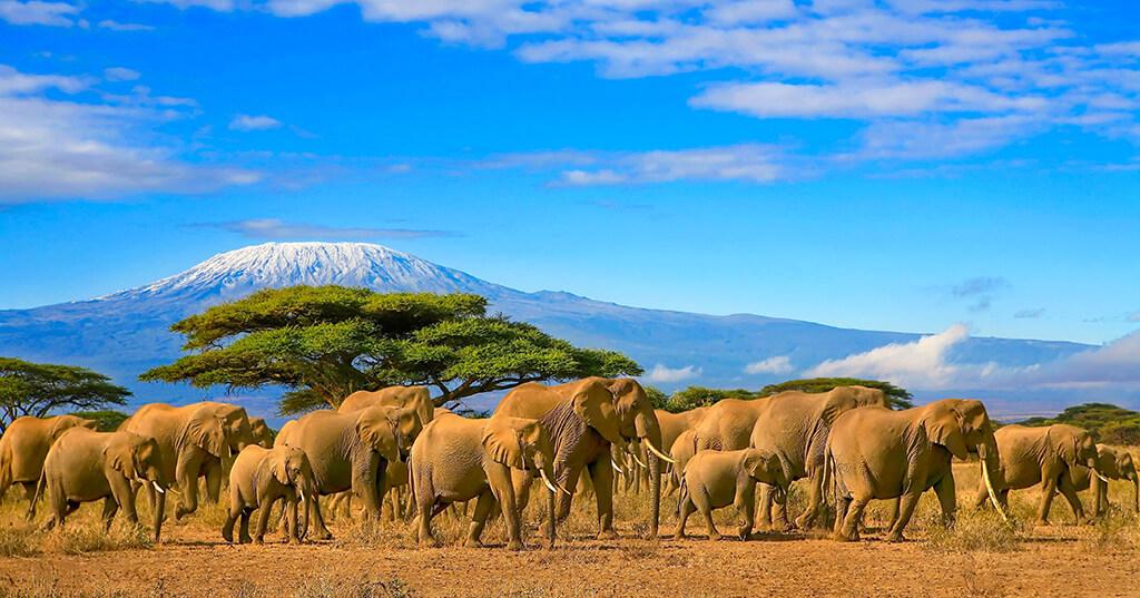 ELEPHANTS ON SAFARI TRIP