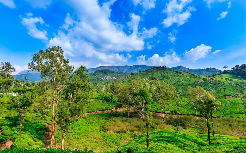 INDIA VALPARAI TREES