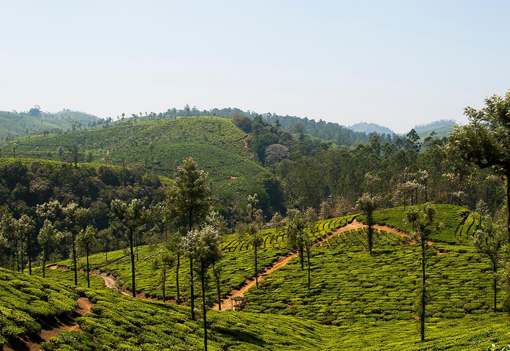 INDIA VALPARAI FOREST